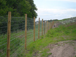 Construction of new forestry fencing - click to enlarge